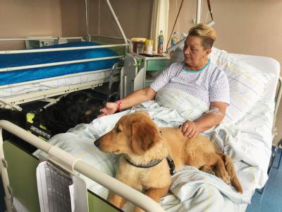 Oblíbené canisterapie v Nemocnici Valašské Meziříčí nově je obohatí štěňátko Bella