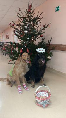 Nemocnice AGEL Valašské Meziříčí se ponořila do vánoční atmosféry