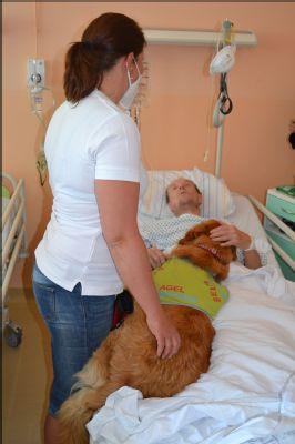 Nemocnice AGEL Valašské Meziříčí opětovně rozjíždí canisterapii. Oblíbení čtyřnozí terapeuté se vrátili k pacientům po více než roce